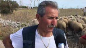Le vie della transumanza, sul tratturo Foggia-Campolato con Michele Turco e le sue pecore